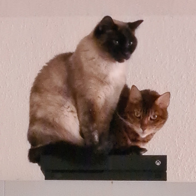 Christian Funk - Katzen Lotta und Lilly